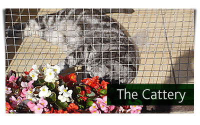 Chelmsford Licensed Boarding Cattery